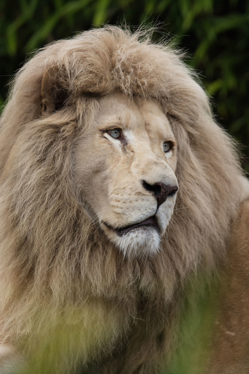one animal, animal themes, mammal, animal head, animals in the wild, day, no people, close-up, portrait, outdoors, nature