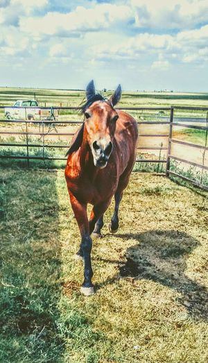 Ranch horses Horse Domestic Animals Animal Themes Paddock Day Livestock Outdoors Rural Scene Corral Mane Stable Pasture Pony Ranch Lifestyle Equine Barn Rural Farm Cowboy Western Country Livestock Working Animal Cattle Ranch