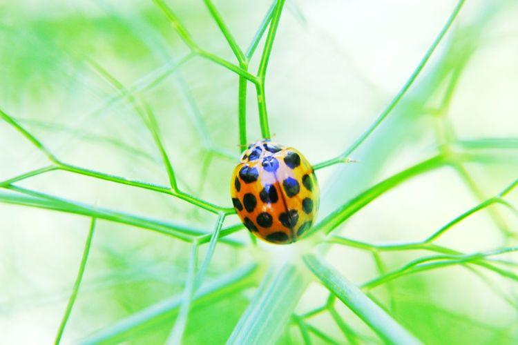 Spots Nature