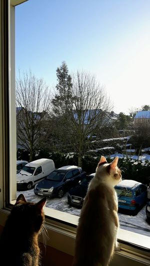 My Cats Cat Lovers Cats Attitudes Cats Watching Outside Curiosity Snow Beautiful Weather