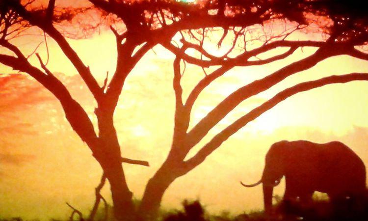 wunderschönes Afrika, Elefant, Sonne EyeEmNewHere