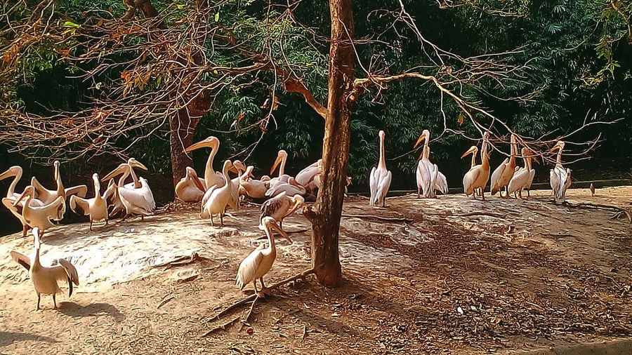 January 1st trip to zoo see Birds.. India Northeast Assam Photography Beauty In Nature Colours Of Nature Patterns In Nature Green Leaves Jannuary Bird Photography Birds Of EyeEm  Water Heat - Temperature Motion Tree Outdoors Low Section No People Day Sky EyeEmNewHere EyeEm Best Shots Adapted To The City