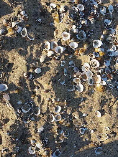 Full frame shot of pattern on beach