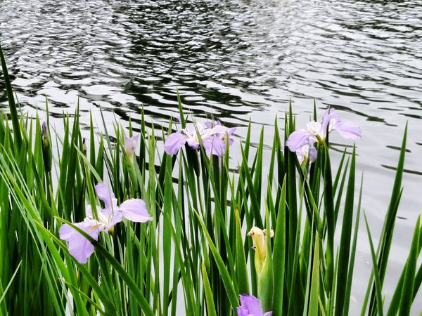 Spring Into Spring Flower Collection Flower Porn EyeEm Nature Lover Loving Nature Iris Water Flowers Flowerpower EyeEm Gallery EyeEm Charleston