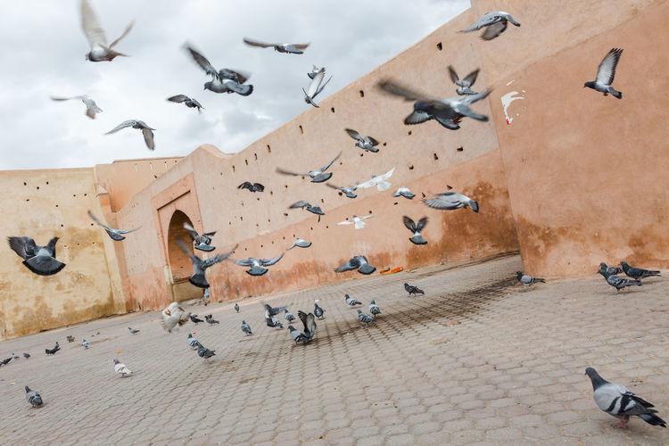 Flock of birds flying against building
