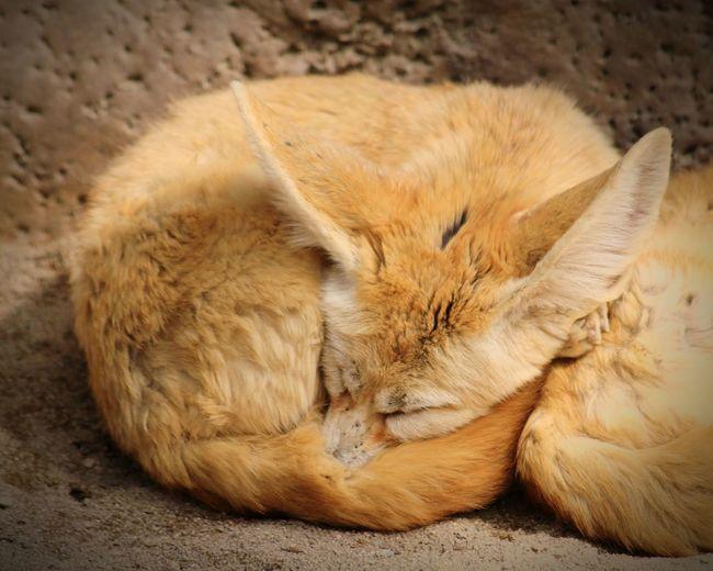 Cat sleeping on the ground