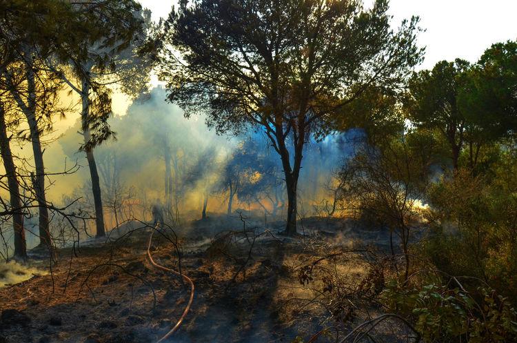 Burning Burning Wood Disaster Fire Fireman Firemen Forest Forestfire Lebanon Natural Disaster Non-urban Scene Smoke