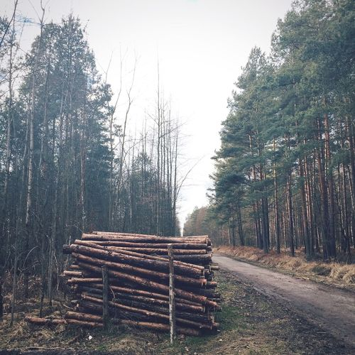 Forest obsession Walking Around VSCO Eye4photography  Vscocam EyeEm Nature Lover Nature_collection