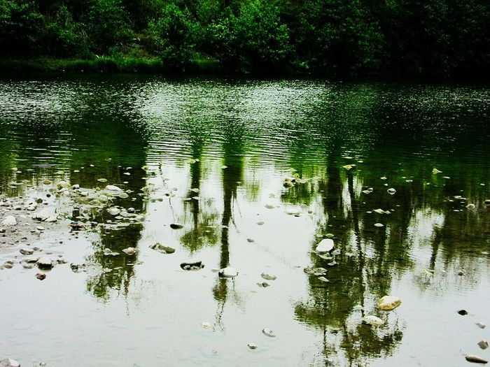 TreePorn Silhouettes Water Reflections Mad River River Collection Hugging A Tree Escaping Beautiful Mothernature Check This Out
