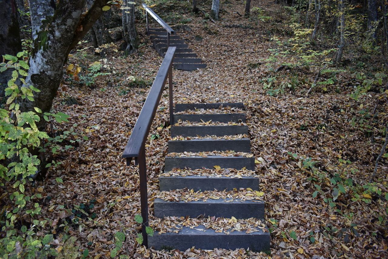 staircase, steps and staircases, the way forward, nature, architecture, direction, no people, day, land, plant, forest, railing, outdoors, moving up, metal, tree, abandoned, ladder, high angle view, built structure