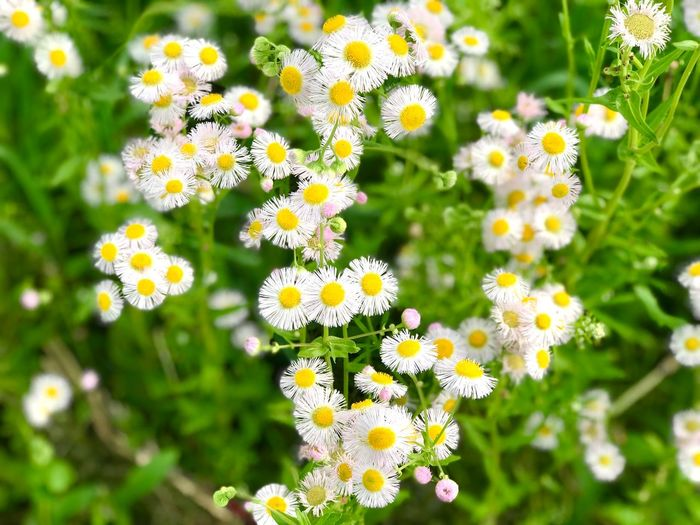 Flower Flowering Plant Plant Freshness Fragility Vulnerability  Beauty In Nature Growth Flower Head Inflorescence Petal No People Close-up Nature Yellow Focus On Foreground Day Park - Man Made Space Green Color Park