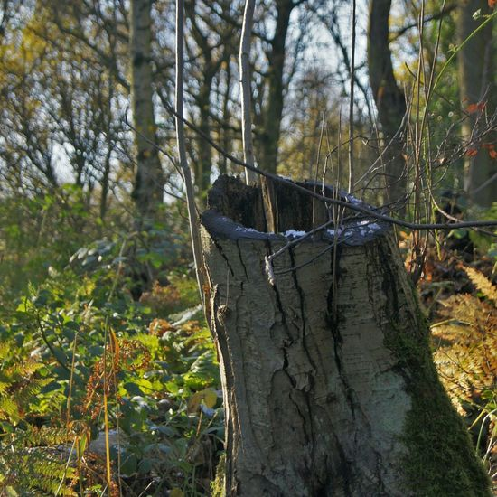 Linacre Woods. Taking Photos Dslrphotography DSLR Treestump Landscape Landscape_photography
