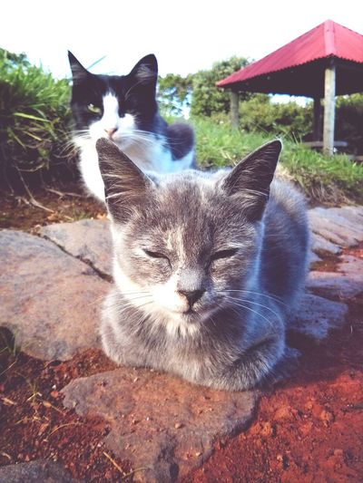 Cat Content Azzzores