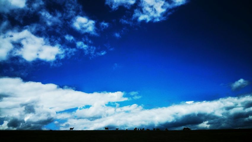 Silhouette Sheeps Hapes Sky Clouds Atmosphere Perspective Smallness Czech Republic Nature