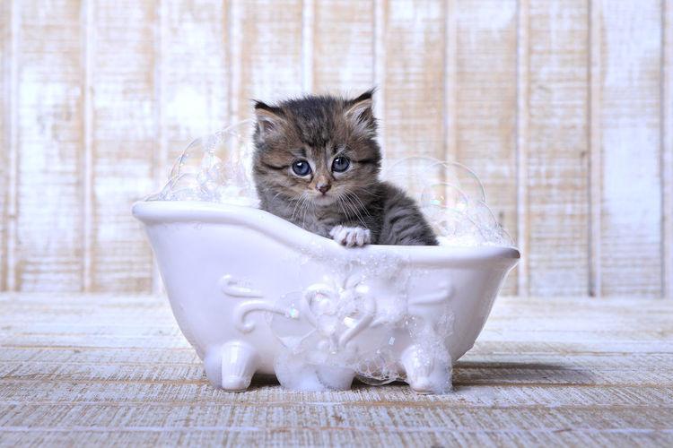 Portrait of kitten in bathroom
