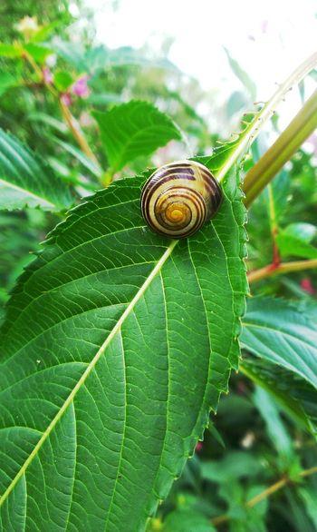 Schnecke Leaf Nature Hello World