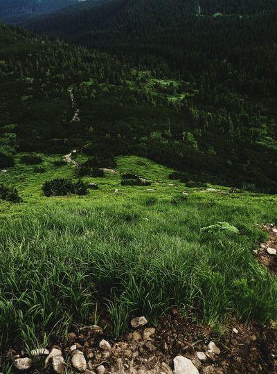 #carpathians #Mountains #carpathiansmountains Field High Angle View Grass Green Color Landscape