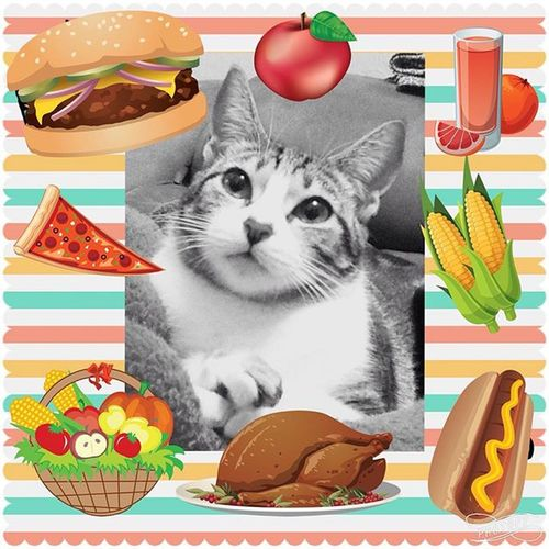 Good Afternoon‼️ Food 😻 🍔🍕🍎🍊🍅🍏🌽🍗 Nenêthefatcat Nenêcat Nenêmyfatcat Ilovemyfood Cat Ilovecats Catsoninstagram Catslovers Fat