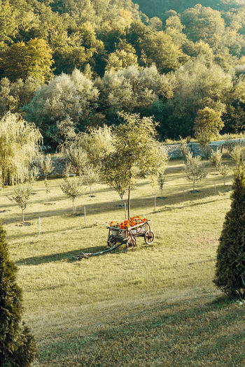 Carriage with flowers Plant Tree Transportation Mode Of Transportation Day Nature Land Grass Sunlight Field Growth Landscape Outdoors Green Color Tranquility Tranquil Scene Beauty In Nature Machinery Flower Flowers Travel Nature Summer Secluded  Carriage