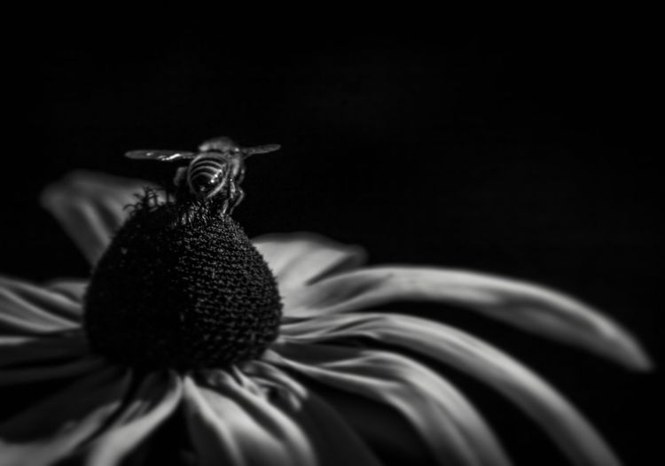Give me some privacy. No People Flower Black Background Close-up One Animal Animal Themes Flower Head Nature Fragility Freshness Day Summertime TrenčianskeTeplice Slovakia🇸🇰 Tranquility Travel Destinations Outdoors Forest Luminosity Rural Scene Beauty In Nature