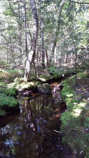 Beautiful Nature Stream Trees Out In The Wilderness Mainewilderness Maine Denseforest Water Reflections Nature Nature Photography