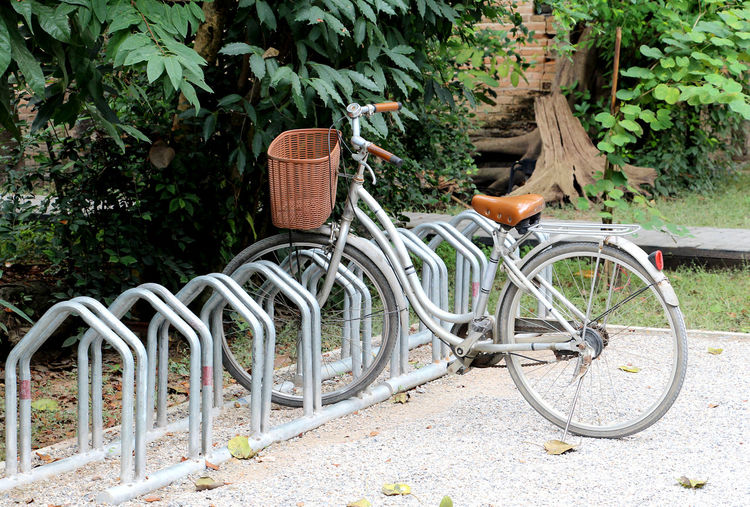 Parking and bicycle in Thailand Parking Wood Relax Thailand Beautiful Beauty Helathcare Summer Relaxation Trees Happiness Holiday Travel Wooden Morning Winter Exercise Happy Countryside Bicycle Transportation Day Outdoors No People Growth Mode Of Transport Bicycle Rack Plant Nature Tree