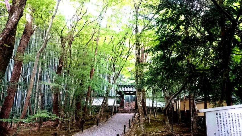 Tree Tourism Vacations Day Nature Beauty In Nature Bamboo Bamboo Forest Bamboo Trees