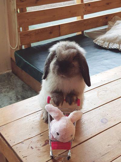 Day Mammal Rabbit Rabbit Portrait Rabbit Face