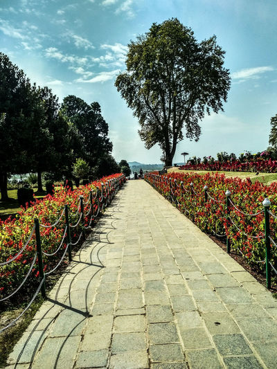 Before fall. Photography Photooftheday Getty Images Mobilephotography Kashmir Kashmirdiaries Nature IndianOccupiedKashmir Naturelovers Nature Photography Flowers Flower Garden Garden Photography Garden Flowers Nishat Bagh Srinagar Kashmir Photogtapher Tree Shadow Sky