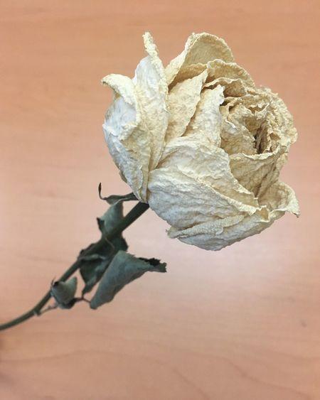 O aprendes a querer la espina o no aceptes rosas... Amor Color Y .....