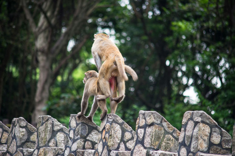 Low angle view of monkeys mating