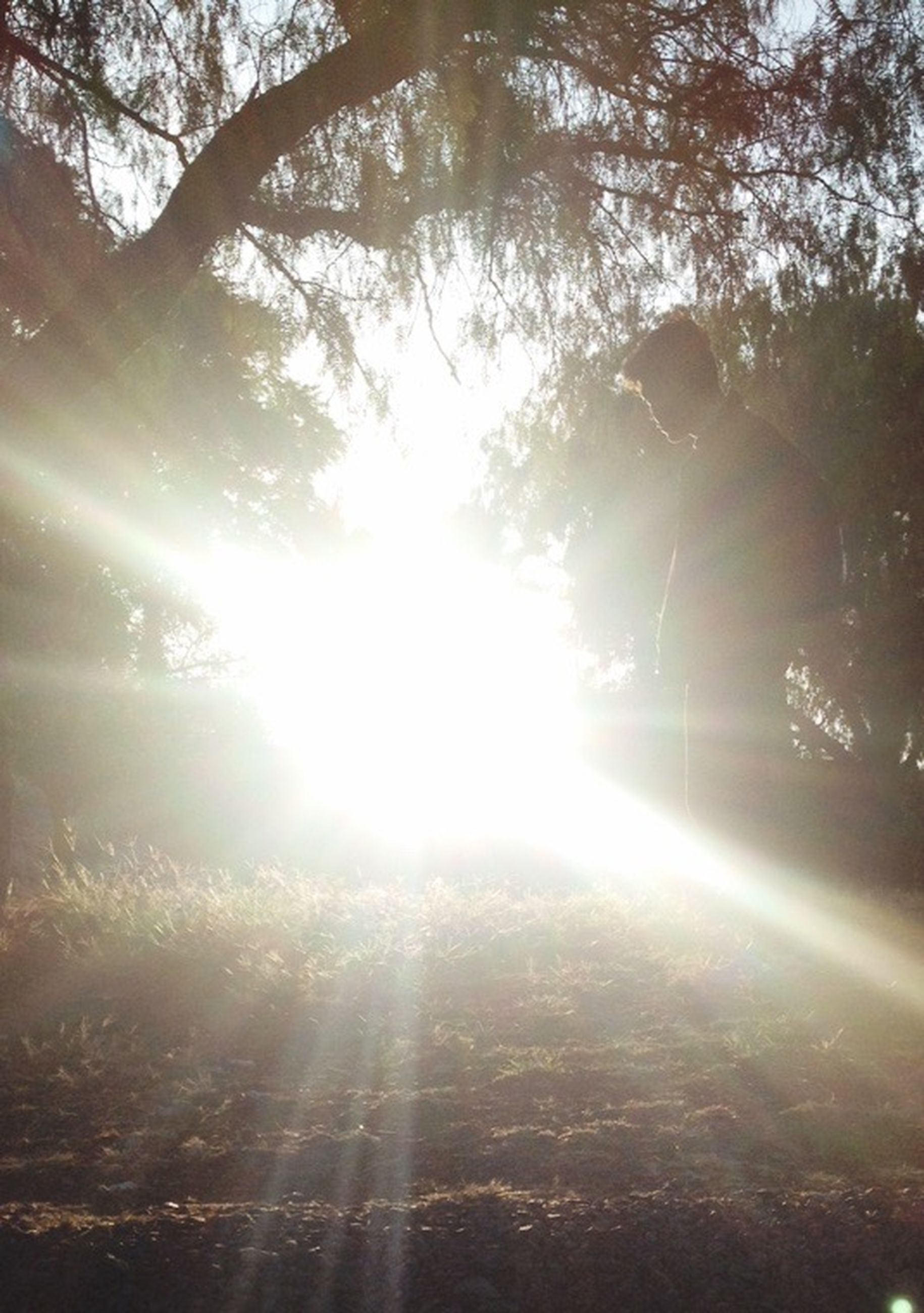 sun, sunbeam, lens flare, sunlight, tree, bright, tranquility, sunny, beauty in nature, nature, tranquil scene, scenics, streaming, back lit, growth, forest, shiny, low angle view, idyllic, outdoors