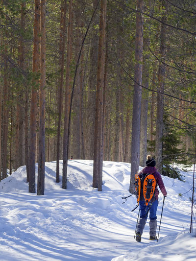 Rear View Of Woman Walking On Snow Covered Land Amidst Tree Trunks