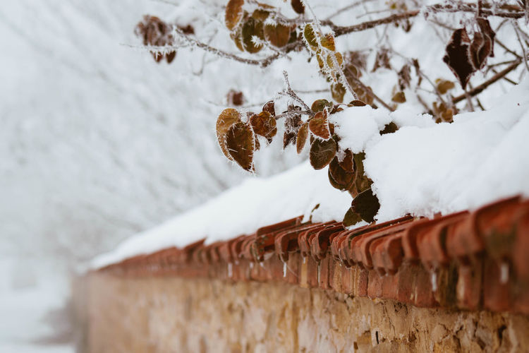 Cold Temperature Snow Winter Frozen No People White Color Close-up Day Nature Focus On Foreground Architecture Outdoors Ice Covering Beauty In Nature Wall - Building Feature Built Structure Tree Selective Focus Icicle Snowing
