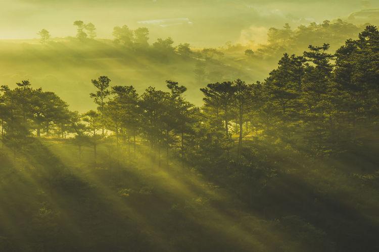 Sunlight falling on tree in forest