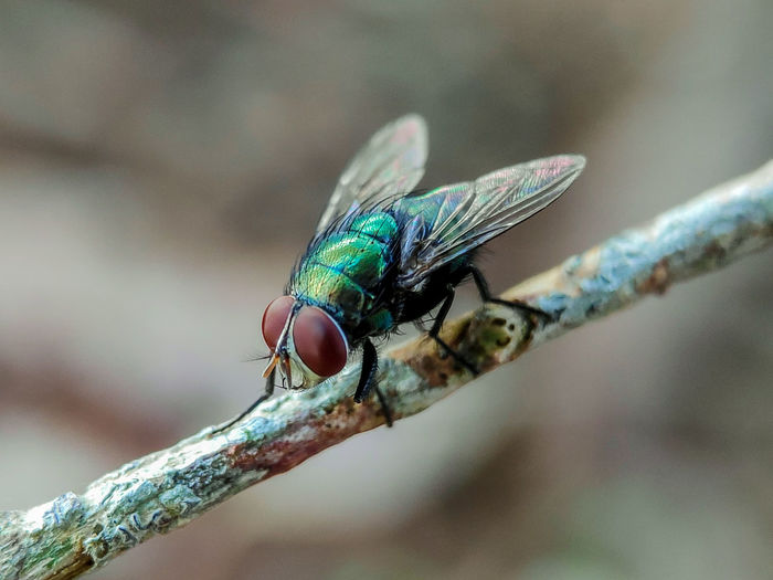 Close-up of fly on branch