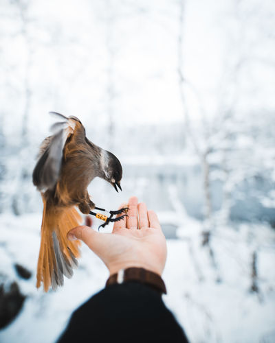 Bird perching on human hand outdoors