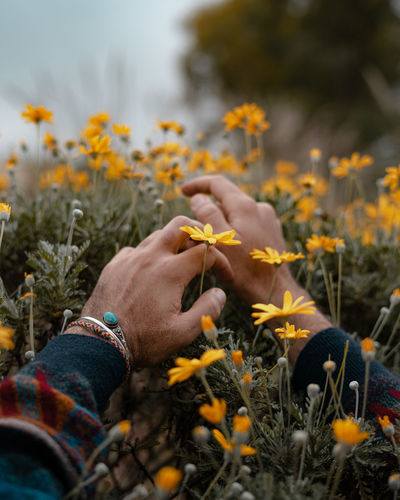 Close-up of hand inside a yellow flowers on field