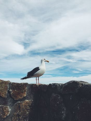 Beauty In Nature Bird Blue Cloud Cloud - Sky Cloudy Day Focus On Foreground Idyllic Nature No People Outdoors Scenics Sea Bird Seagull Sky Tranquil Scene Tranquility