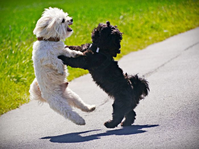 View of dog running