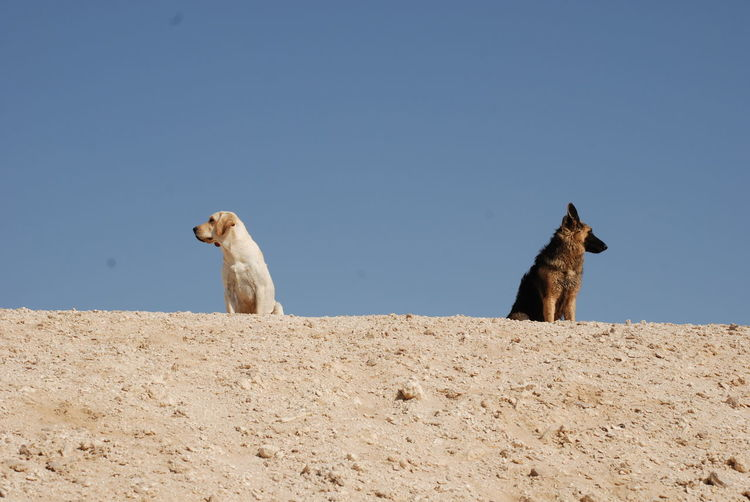 Low Angle View Of Dogs Sitting Against Blue Sky