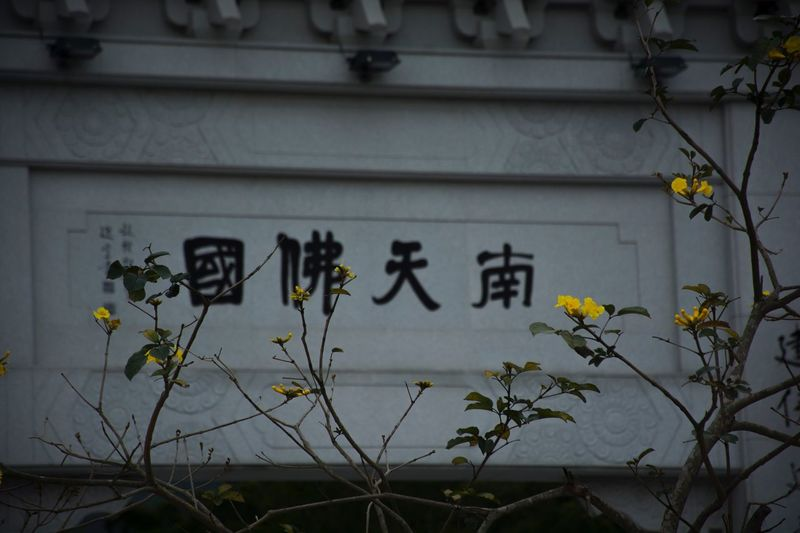 Text Flower Communication Architecture Built Structure Plant Building Exterior Yellow No People Outdoors Day Close-up