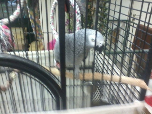 Hello World Birds a bird in prison