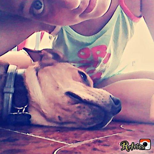Sam Mydog Funny Pretty