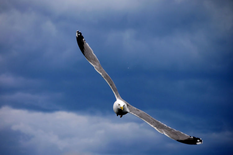 Low Angle View Of A Bird Flying Against Blue Sky