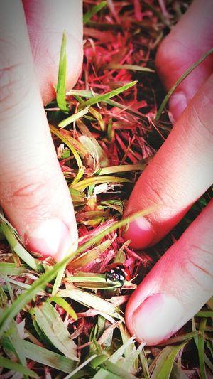 ハートな目のてんとう虫♡