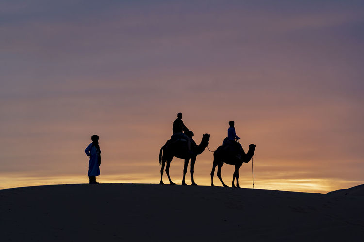 Sunset Sunrise Sky Real People Mammal Silhouette Lifestyles Riding Camel Camels Dromedary Bedouin Desert Desert Sunrise Desert Sunset Nomadic Sahara Sahara Desert North Africa Middle East Berber  Standing Cloud And Sky Orange Color Travel Destinations