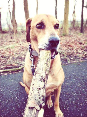 Stick Mammal Day Pet Collar No People Sitting Nature