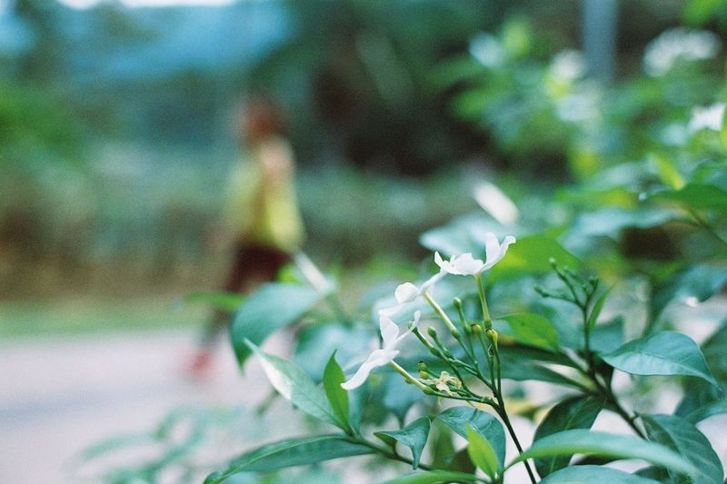 Walk in the park Flower White Park Walk Bokeh Lomography Film