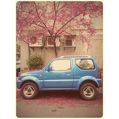 Car Redpink flowerStreet Blooming Beautiful 櫻花 Blue 藍色車 開花